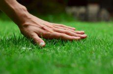 Как правильно ухаживать за газонами