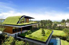 Особенности зеленой крыши