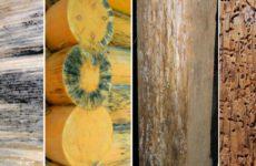Защита древесины от внешнего воздействия